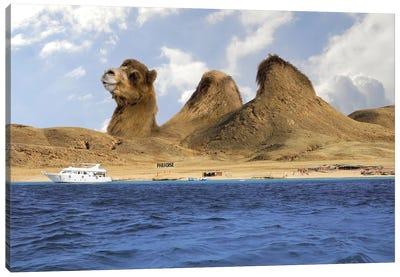 Camel Mountains Canvas Art Print