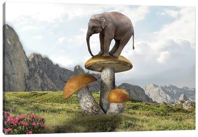 Words On Mushrooms Canvas Art Print