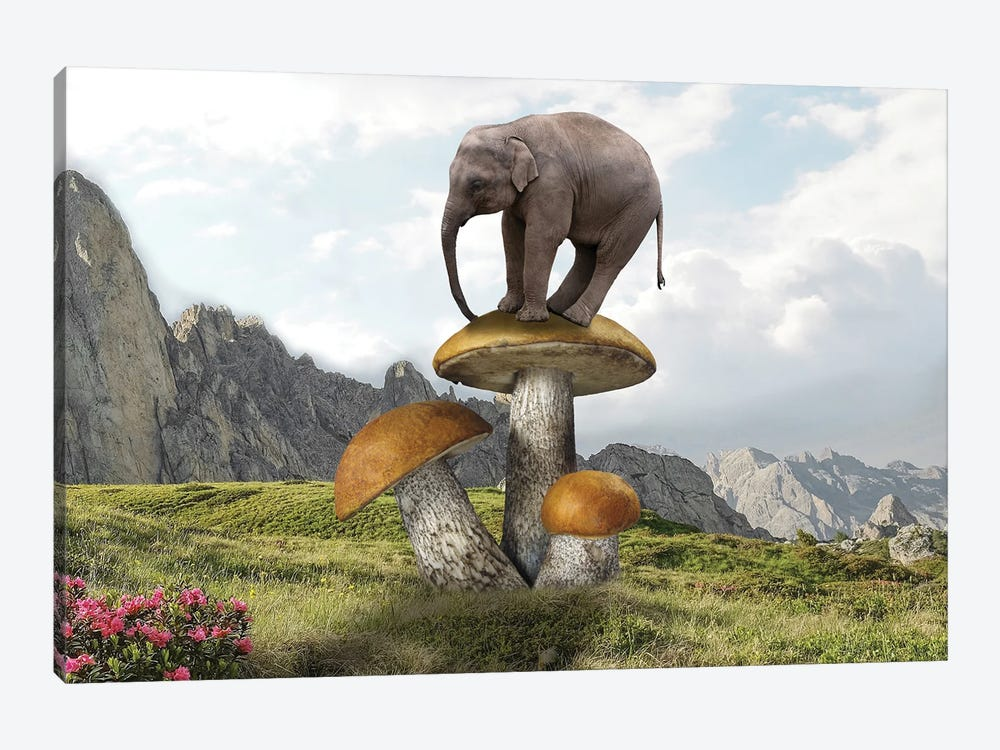 Words On Mushrooms by Dmitry Biryukov 1-piece Art Print