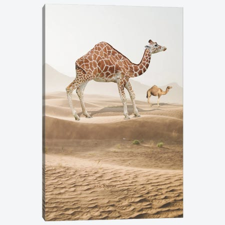 Giraffe Camel Canvas Print #DBY38} by Dmitry Biryukov Canvas Wall Art