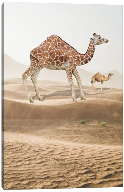 Giraffe Camel Canvas Art Print