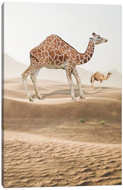 Giraffe Camel Canvas Art Print