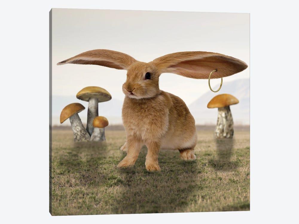 Hare by Dmitry Biryukov 1-piece Canvas Artwork