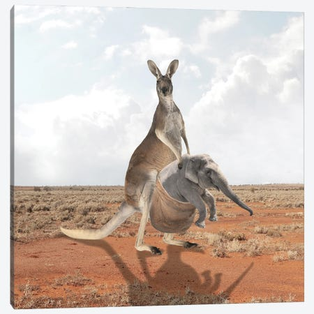Kangaroo Canvas Print #DBY44} by Dmitry Biryukov Canvas Wall Art