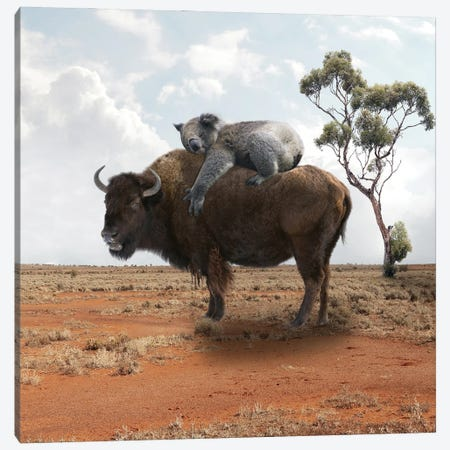 Buffalo Canvas Print #DBY45} by Dmitry Biryukov Canvas Artwork