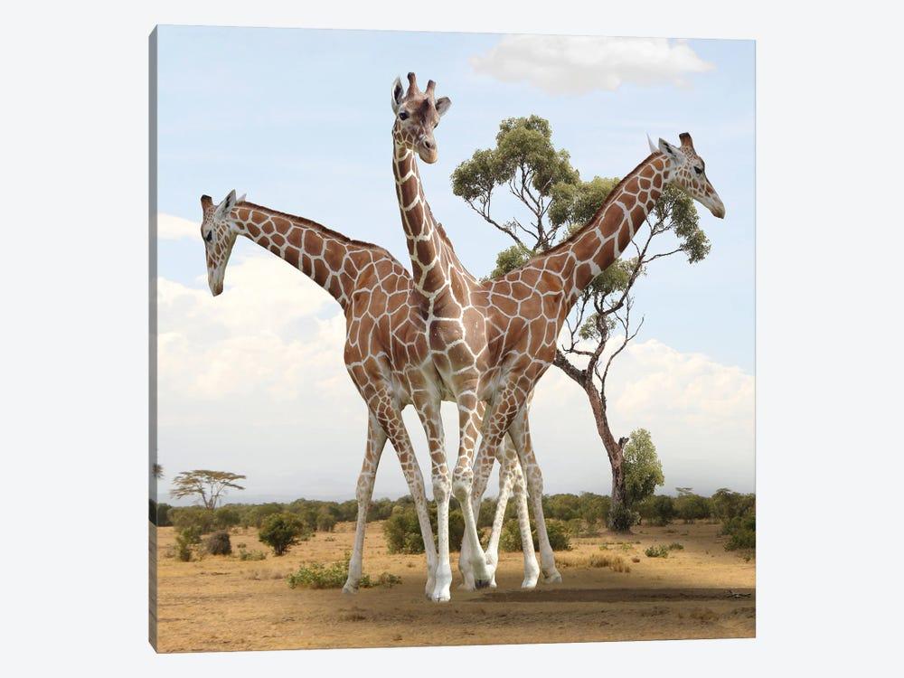 Giraffes by Dmitry Biryukov 1-piece Canvas Art