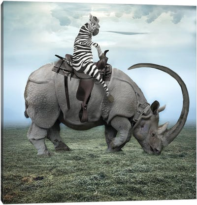 Zebra Stripes On A Rhino Canvas Art Print