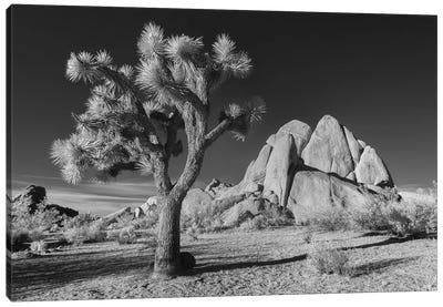 California Joshua Tree X Canvas Art Print