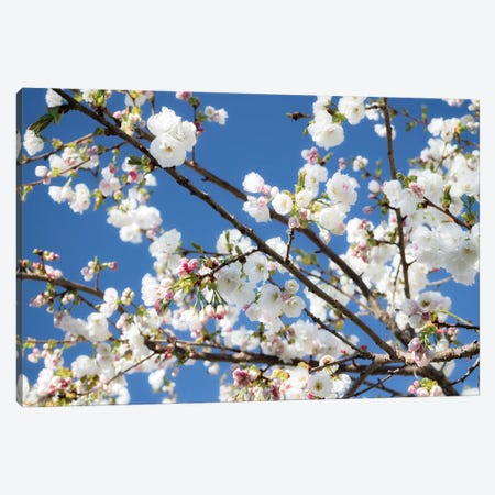 Cherry Blossom IX 3-Piece Canvas #DCL15} by David Clapp Canvas Art Print