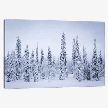 Finland Riisitunturi I Canvas Print #DCL18} by David Clapp Canvas Artwork