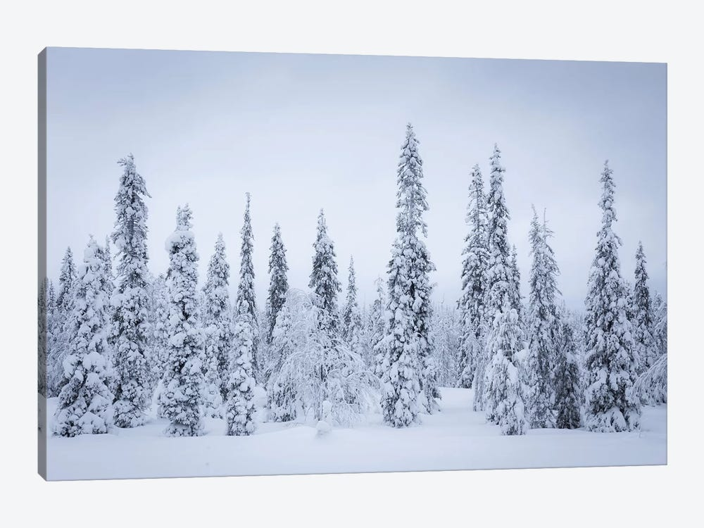 Finland Riisitunturi I by David Clapp Photography Limited 1-piece Canvas Wall Art