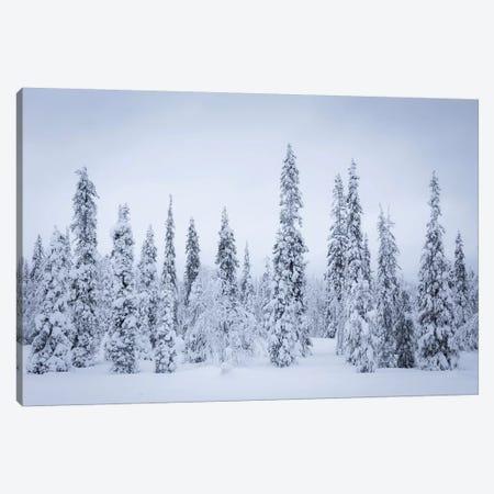 Finland Riisitunturi I Canvas Print #DCL18} by David Clapp Canvas Artwork