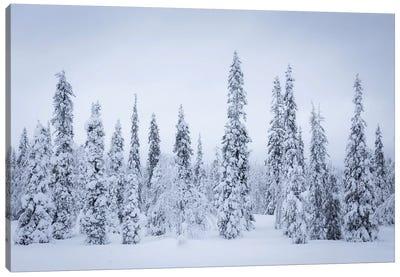 Finland Riisitunturi I Canvas Art Print