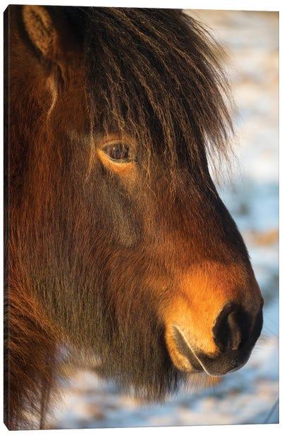 Iceland Horses I Canvas Art Print