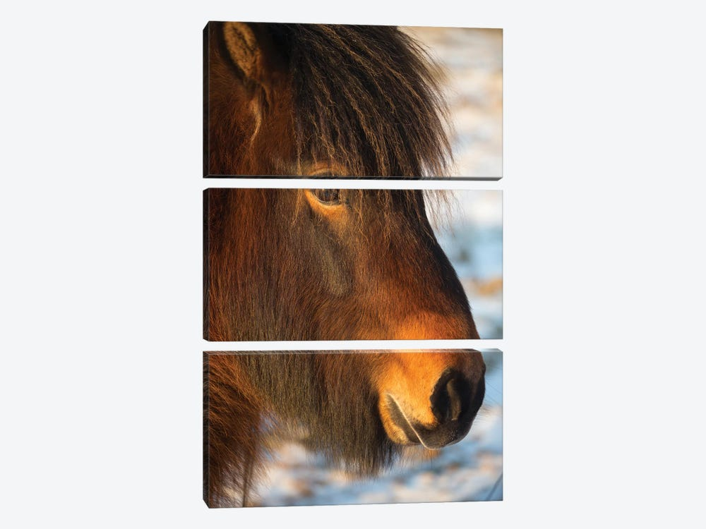 Iceland Horses I by David Clapp Photography Limited 3-piece Canvas Wall Art