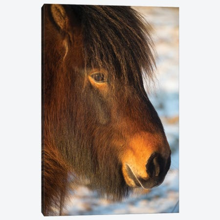 Iceland Horses I 3-Piece Canvas #DCL21} by David Clapp Canvas Print