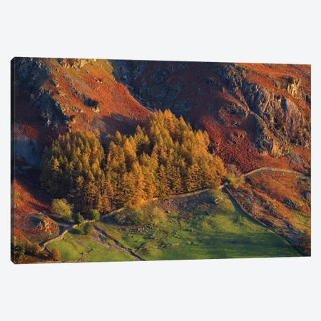 Lakes Langdale I Canvas Print #DCL46} by David Clapp Canvas Wall Art