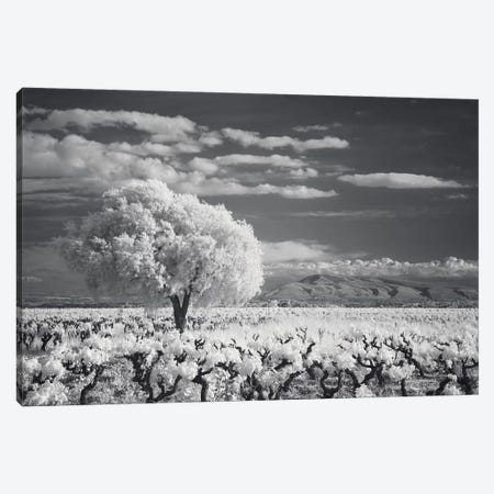 Languedoc Caume Minervois I Canvas Print #DCL48} by David Clapp Photography Limited Art Print