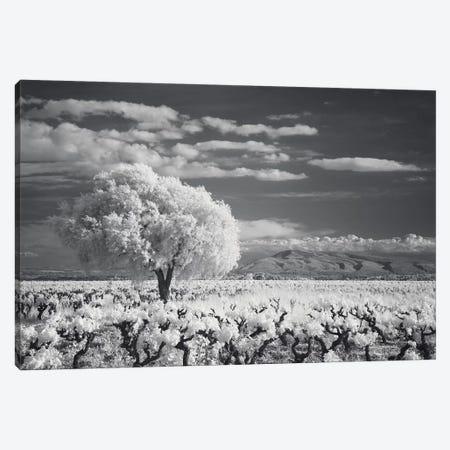 Languedoc Caume Minervois I Canvas Print #DCL48} by David Clapp Art Print