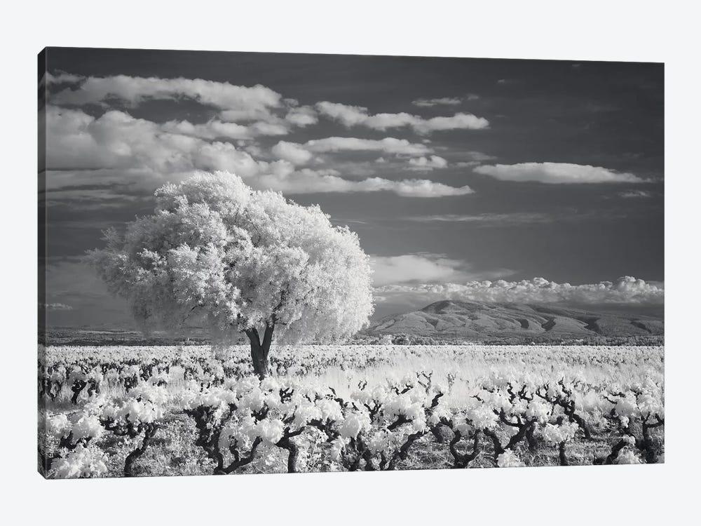 Languedoc Caume Minervois I by David Clapp 1-piece Canvas Art Print