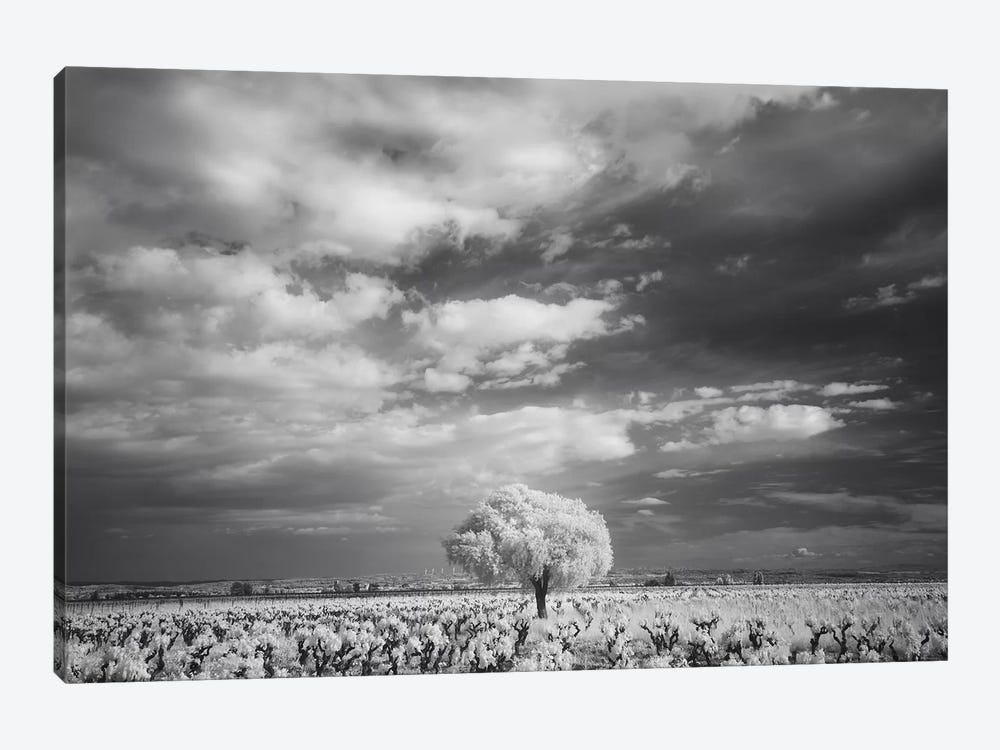 Languedoc Caume Minervois II by David Clapp Photography Limited 1-piece Canvas Wall Art