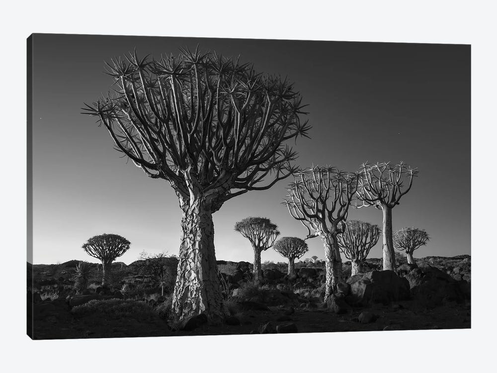 Namibia Keetmanshoop XII by David Clapp Photography Limited 1-piece Canvas Print