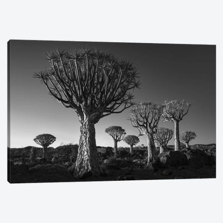 Namibia Keetmanshoop XII 3-Piece Canvas #DCL57} by David Clapp Canvas Print