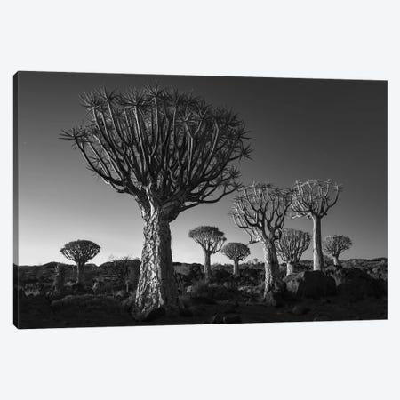 Namibia Keetmanshoop XII Canvas Print #DCL57} by David Clapp Canvas Print