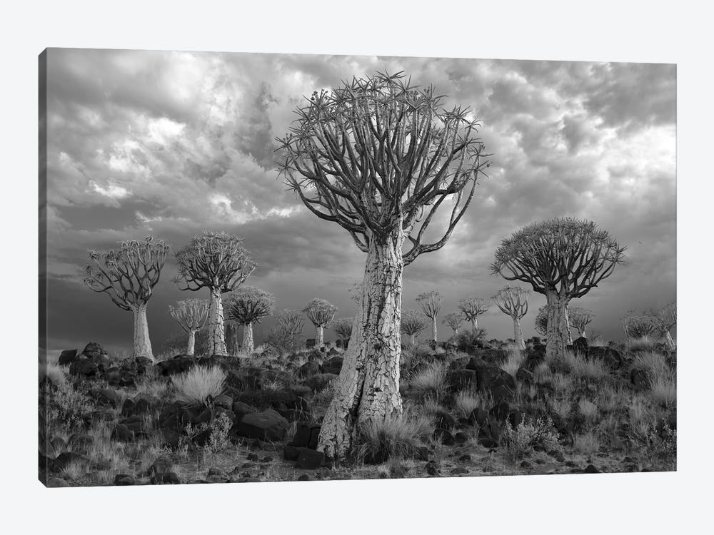 Namibia Keetmanshoop XVII by David Clapp Photography Limited 1-piece Canvas Wall Art