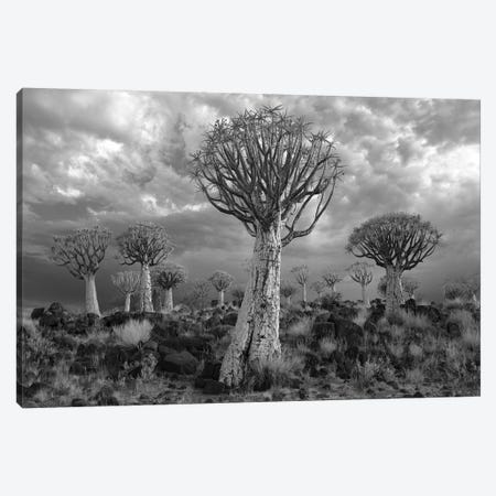 Namibia Keetmanshoop XVII 3-Piece Canvas #DCL58} by David Clapp Canvas Art