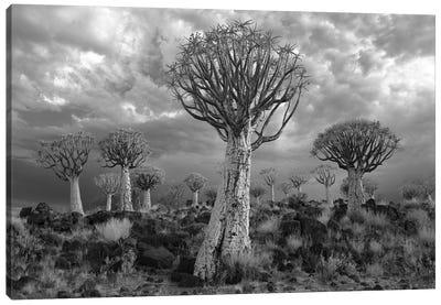 Namibia Keetmanshoop XVII Canvas Art Print