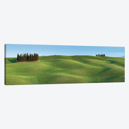 Tuscany Clump I Canvas Print #DCL84} by David Clapp Canvas Artwork
