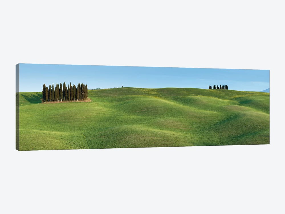 Tuscany Clump I by David Clapp Photography Limited 1-piece Canvas Print