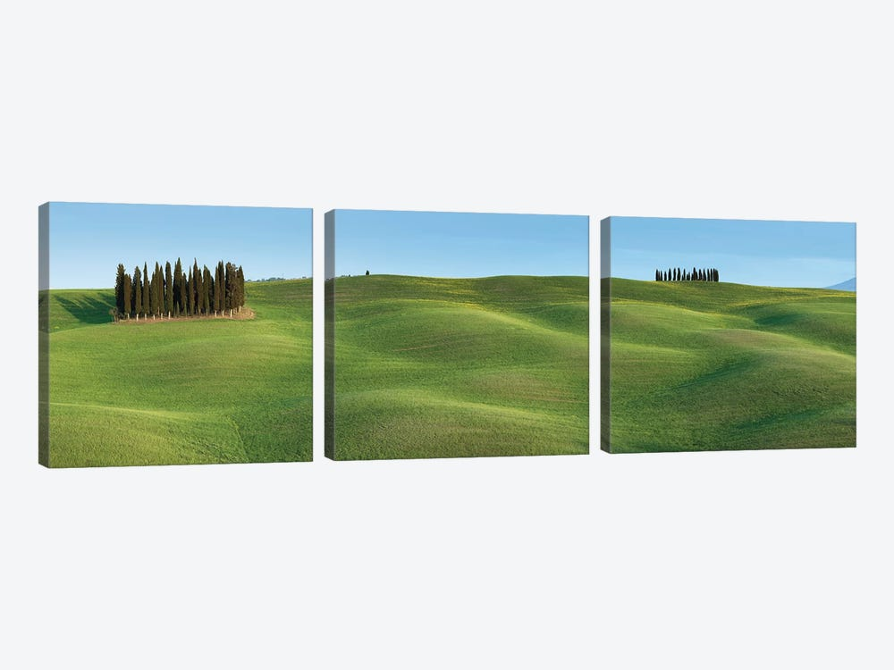 Tuscany Clump I by David Clapp Photography Limited 3-piece Canvas Print