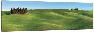 Tuscany Clump I Canvas Art Print