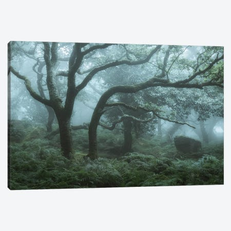 Deep In The Forest I Canvas Print #DCL96} by David Clapp Canvas Art Print
