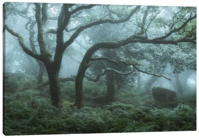 Deep In The Forest I Canvas Art Print
