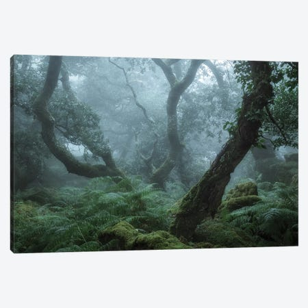 Deep In The Forest II Canvas Print #DCL97} by David Clapp Canvas Print