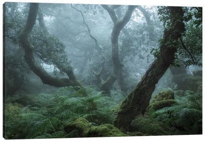 Deep In The Forest II Canvas Art Print