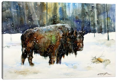 Bison Canvas Art Print