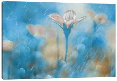 Singing In The Rain Canvas Art Print