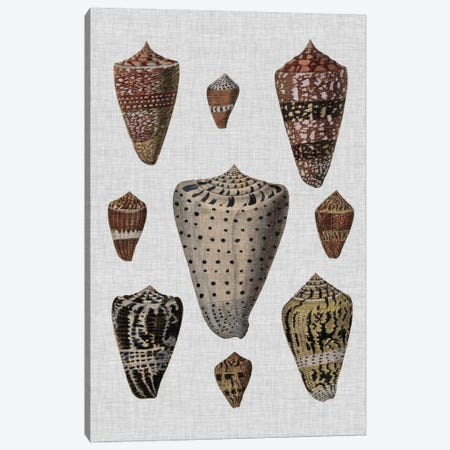 Shell Display I 3-Piece Canvas #DDI1} by Denis Diderot Canvas Art Print