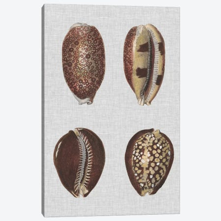 Shell Display III 3-Piece Canvas #DDI3} by Denis Diderot Canvas Print