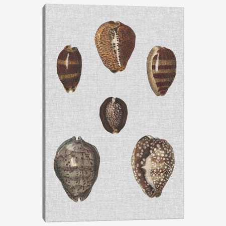 Shell Display IV 3-Piece Canvas #DDI4} by Denis Diderot Canvas Art