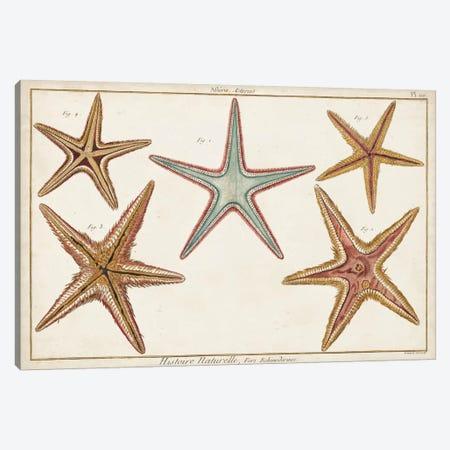 Starfish Naturelle I 3-Piece Canvas #DDI5} by Denis Diderot Canvas Artwork
