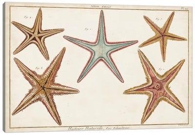 Starfish Naturelle I Canvas Art Print