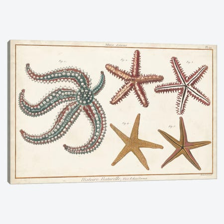 Starfish Naturelle II Canvas Print #DDI6} by Denis Diderot Canvas Artwork