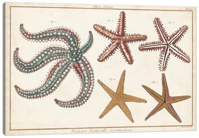 Starfish Naturelle II Canvas Art Print