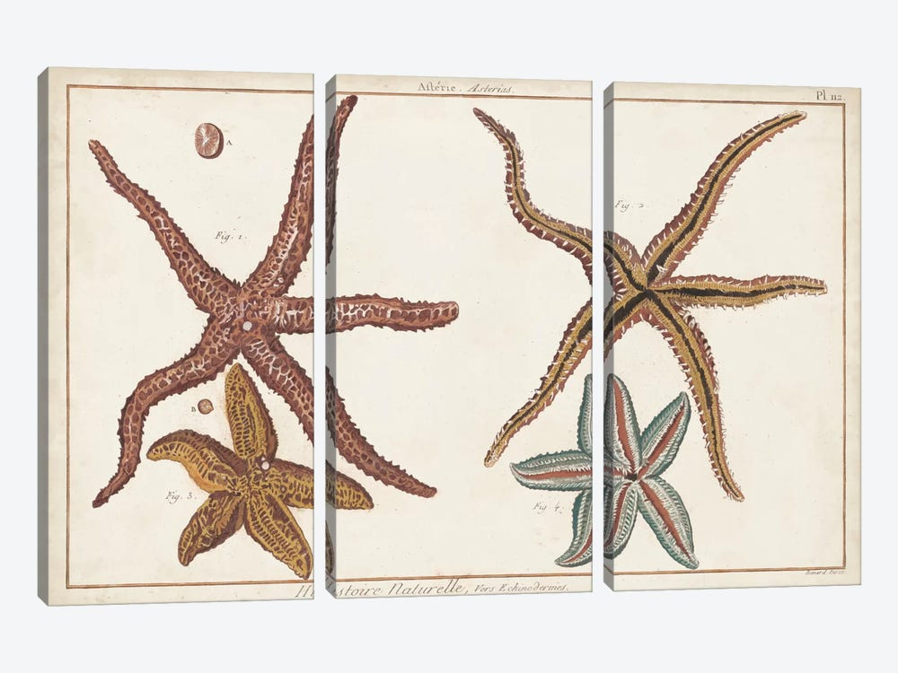 Starfish Naturelle III by Denis Diderot 3-piece Canvas Wall Art