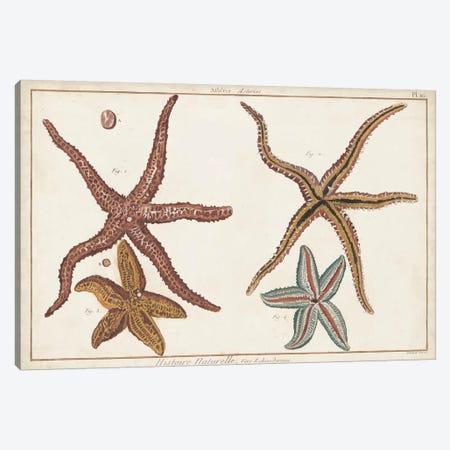 Starfish Naturelle III 3-Piece Canvas #DDI7} by Denis Diderot Canvas Art